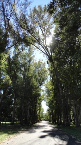 terreno - haras san pablo