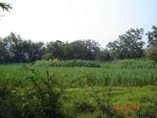 terreno hectáreas en tlaltizapán morelos