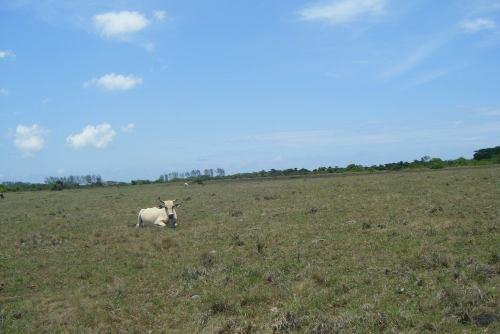 terreno ideal para ganado en km 17.5 alvarado veracruz