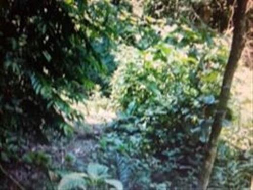terreno ilha bela - vl13882