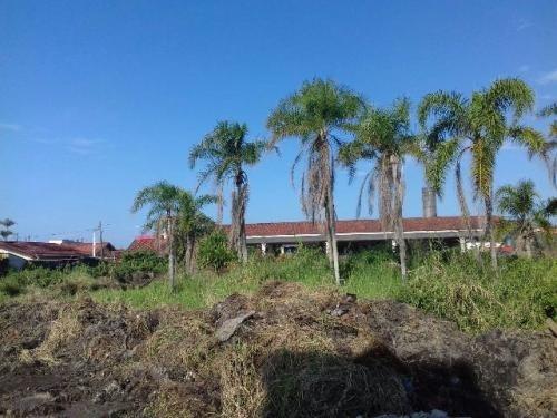 terreno limpo de arvores em itanhaém bal. parque augustus