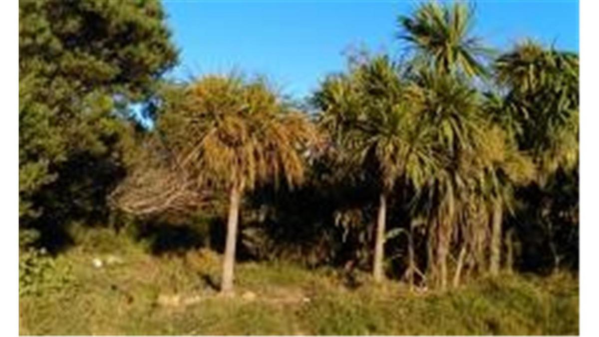 terreno, lote en balneario arachania,rocha, uruguay con casa