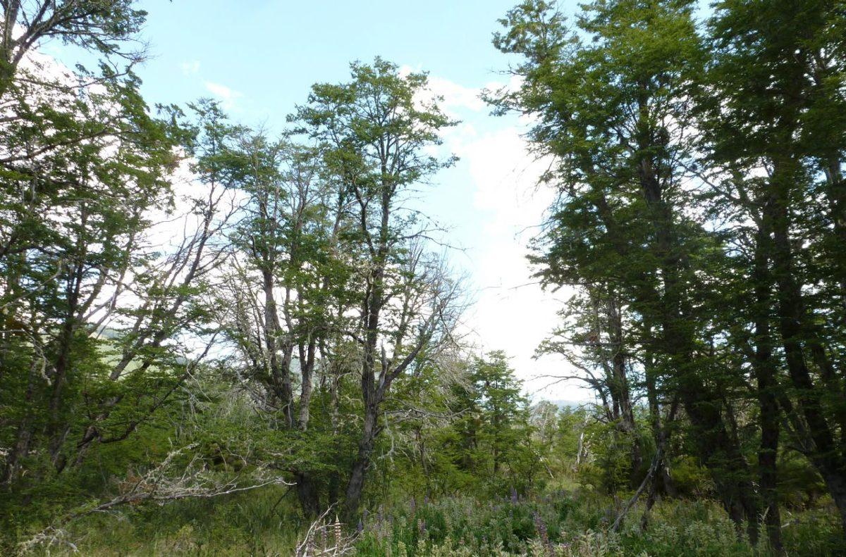 terreno lote  en venta ubicado en lago hermoso, san martin de los andes