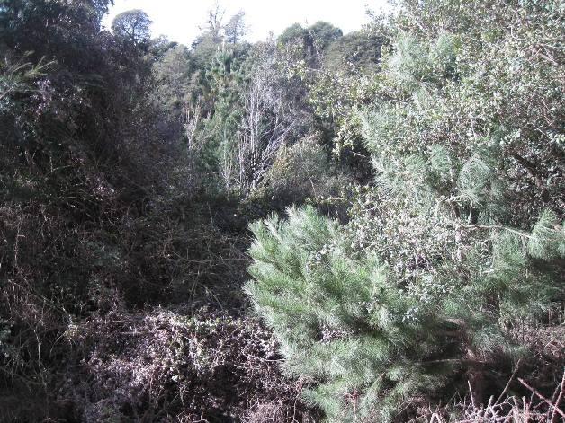terreno lote  en venta ubicado en península san pedro, bariloche