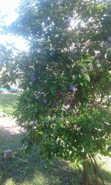 terreno - manzanares