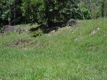 terreno medindo 10 x 60  no patrimônio de trindade