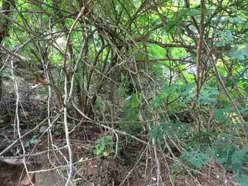 terreno nanzal, sayulita