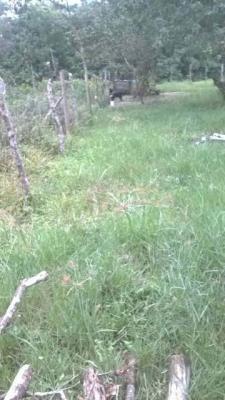 terreno no jardim coronel, em itanhaém, ref. 4574 m h