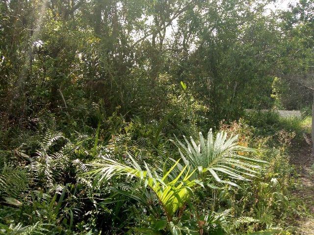terreno no jardim palmeiras, em itanhaém, rua calçada.