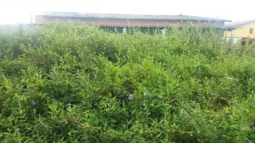 terreno no jardim regina, em itanhaém, medindo 250m²