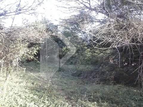 terreno - olaria - ref: 190510 - v-190510