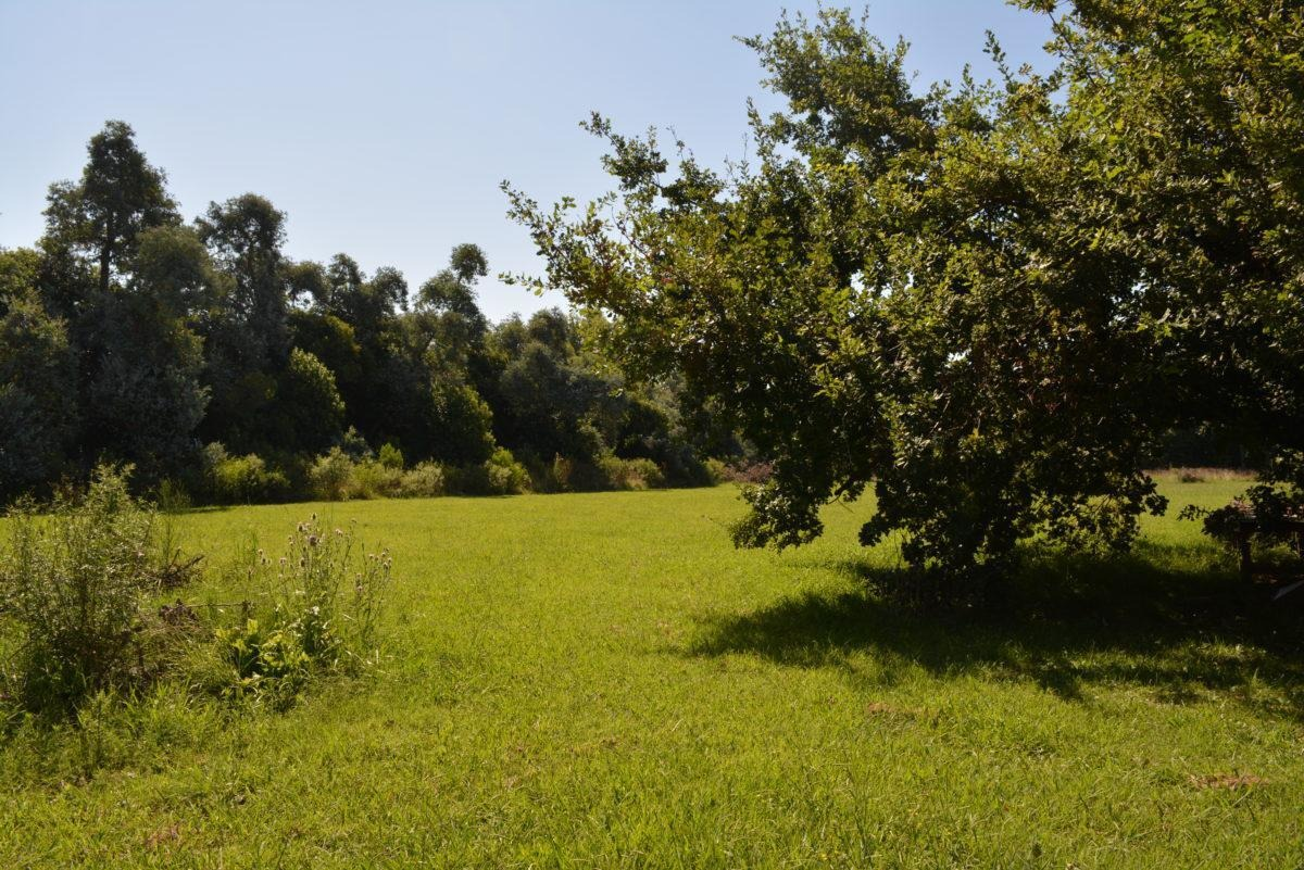 terreno - olivera