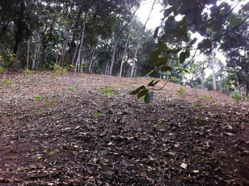 terreno padrão em brusque - te013