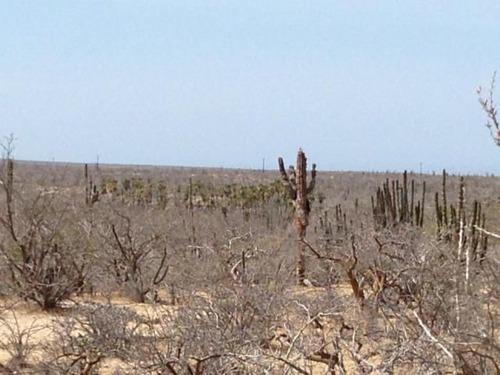 terreno palmerito en melitón albañez