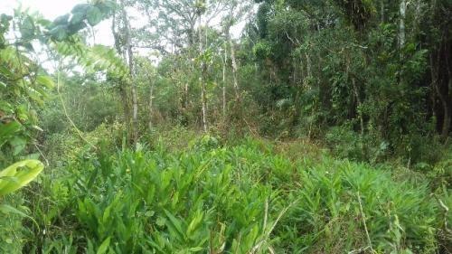 terreno para montar chácara em itanhaém  3308 e