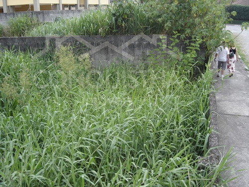 terreno para venda, 250.0 m2, centro - ribeirão pires - 726