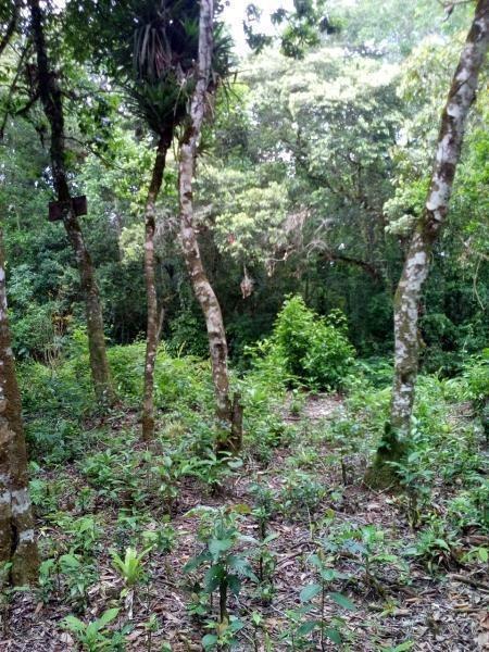 terreno para venda em itanhaém, cidade jardim coronel - 312_2-629689