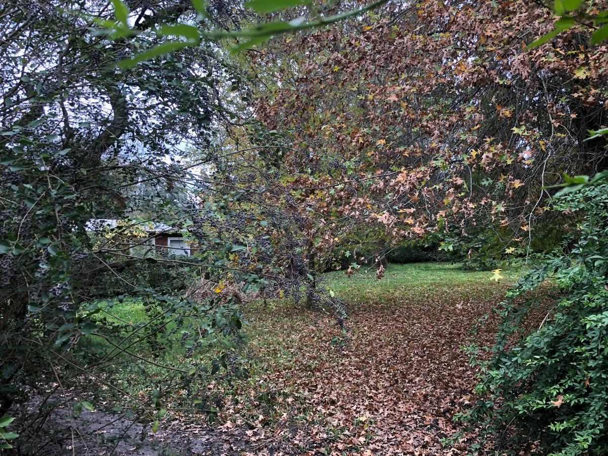 terreno - parque natura