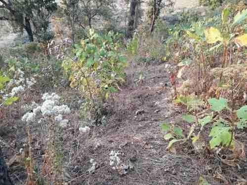 terreno pipiol