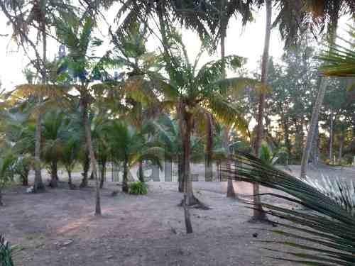 terreno playa tuxpan veracruz en venta de 6824 m², son 44.83 m. de frente y 257.30 m. de fondo, se encuentra ubicado en la playa de barra de galindo, en esa zona de la playa es muy ancha así que tien