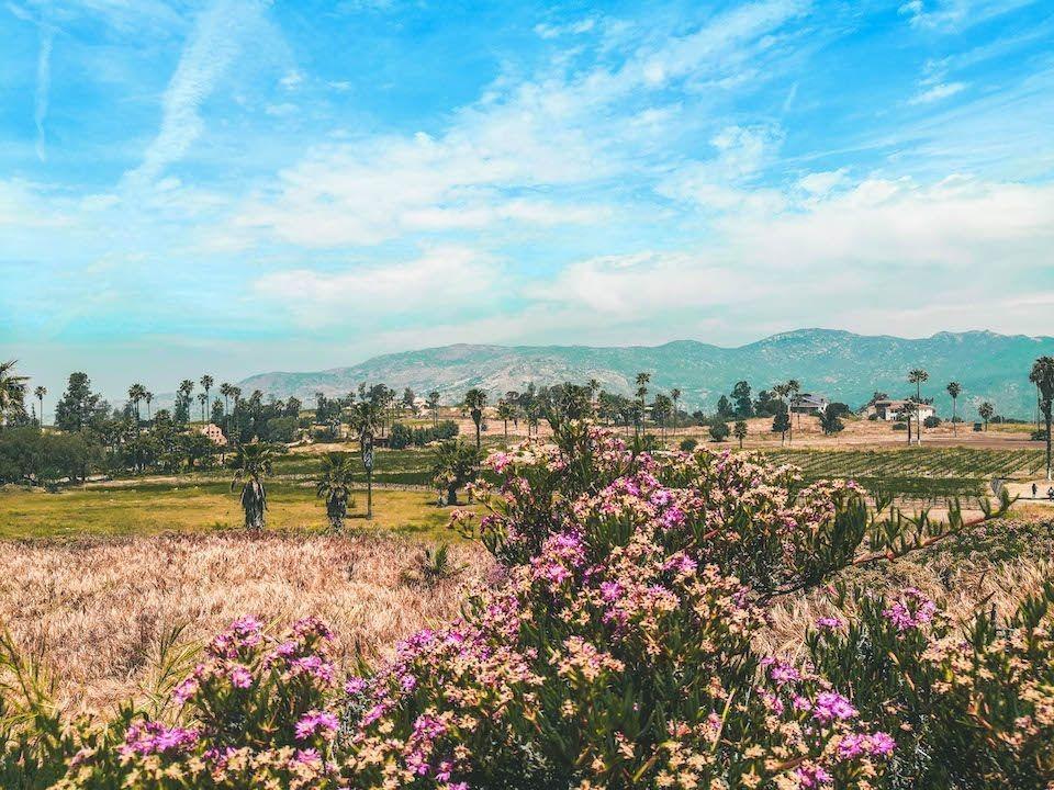 terreno rancho tecate (df)