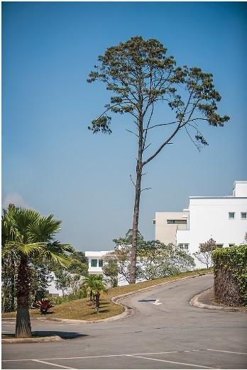 terreno residencial à venda, granja viana, vintage, cotia. - te7337