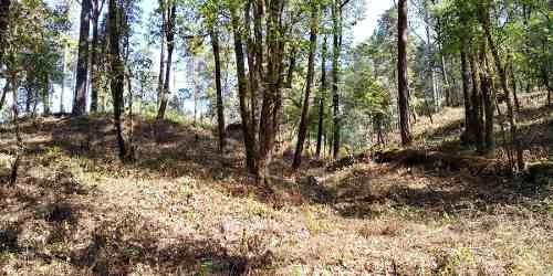 terreno rodeado de bosque en san simón