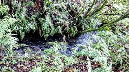 terreno rodeado de río en cerro gordo