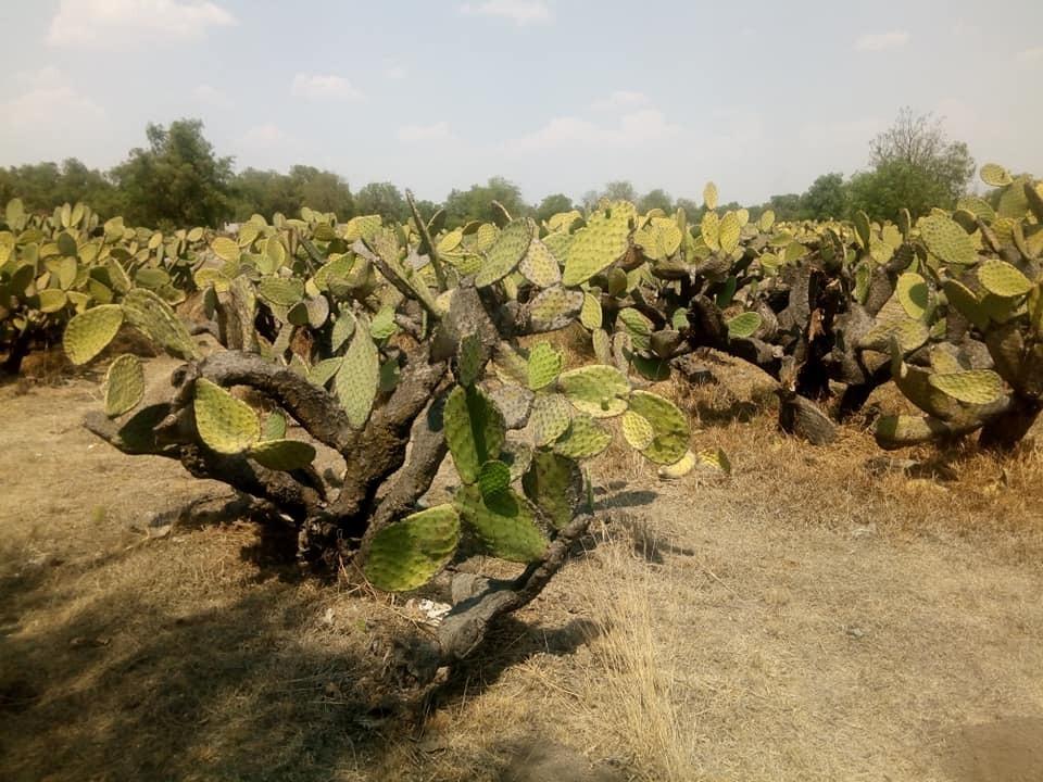 terreno rustico en teotihuacan