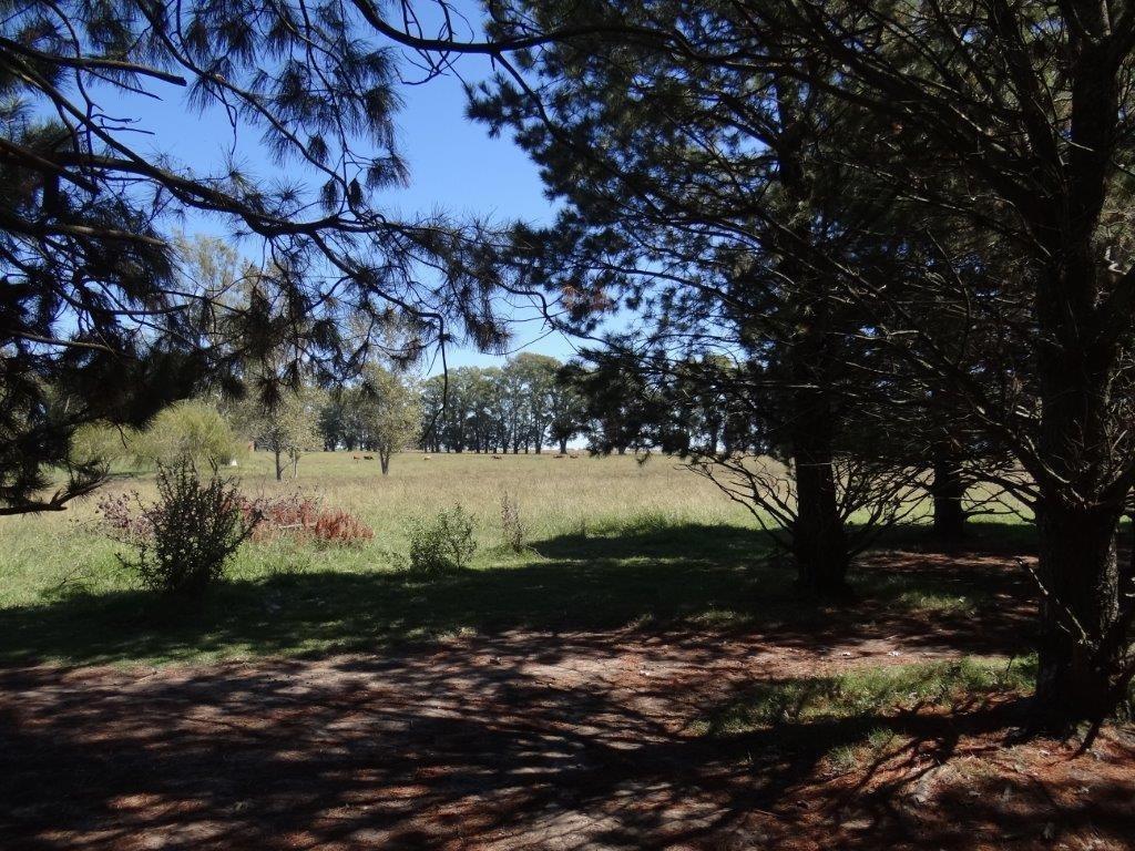 terreno - san jacinto