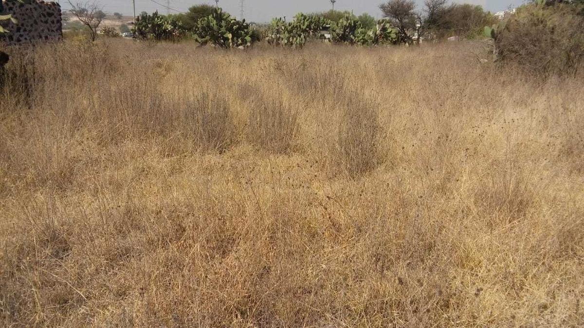 terreno semi plano