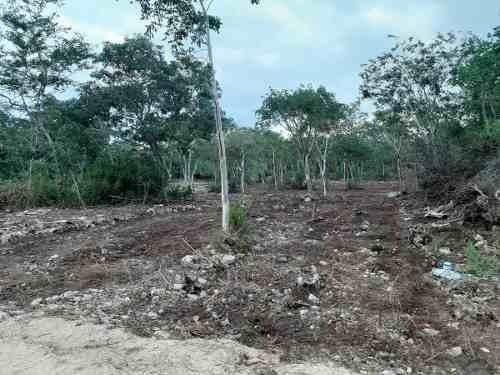 terreno - tixpéhual