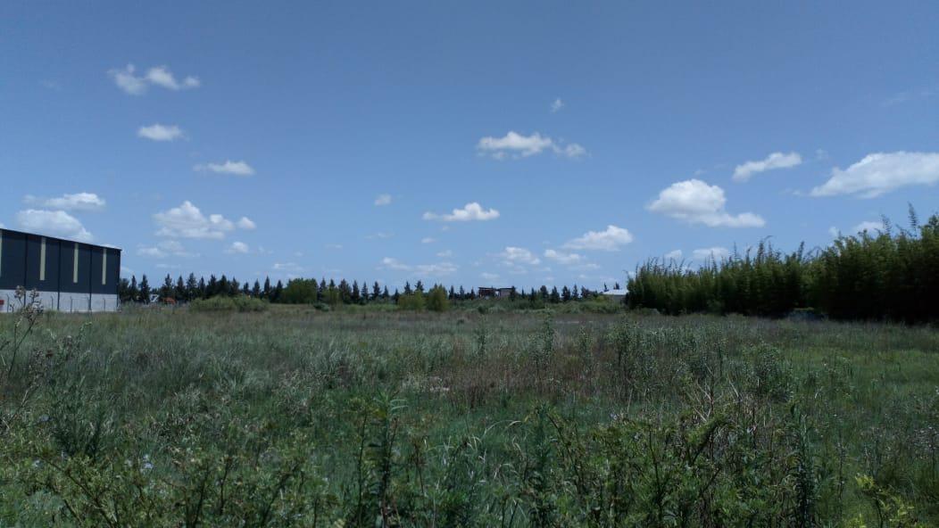 terreno - troncos del talar