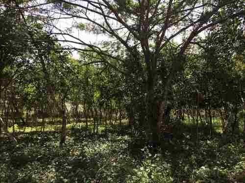 terreno ubicado en la carretera las trancas -  estanzuela