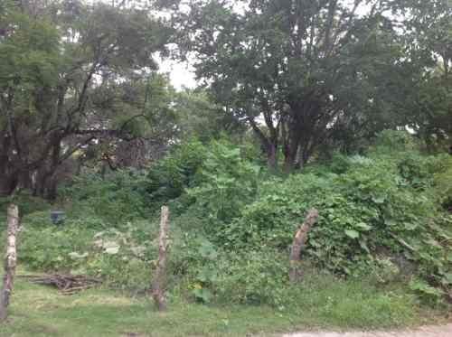 terreno urbano en jardines de xochitepec / xochitepec - plu-173-tu