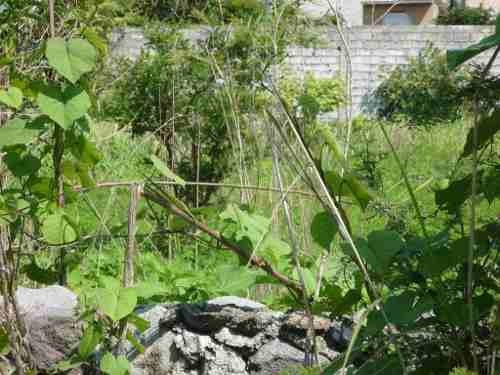 terreno urbano en lomas de trujillo / emiliano zapata - grb-375-tu*