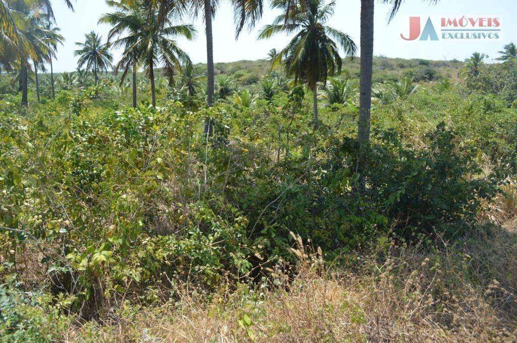 terreno à venda, 10000 m² por r$ 300.000,00 - icaraí - amontada/ce - te0062
