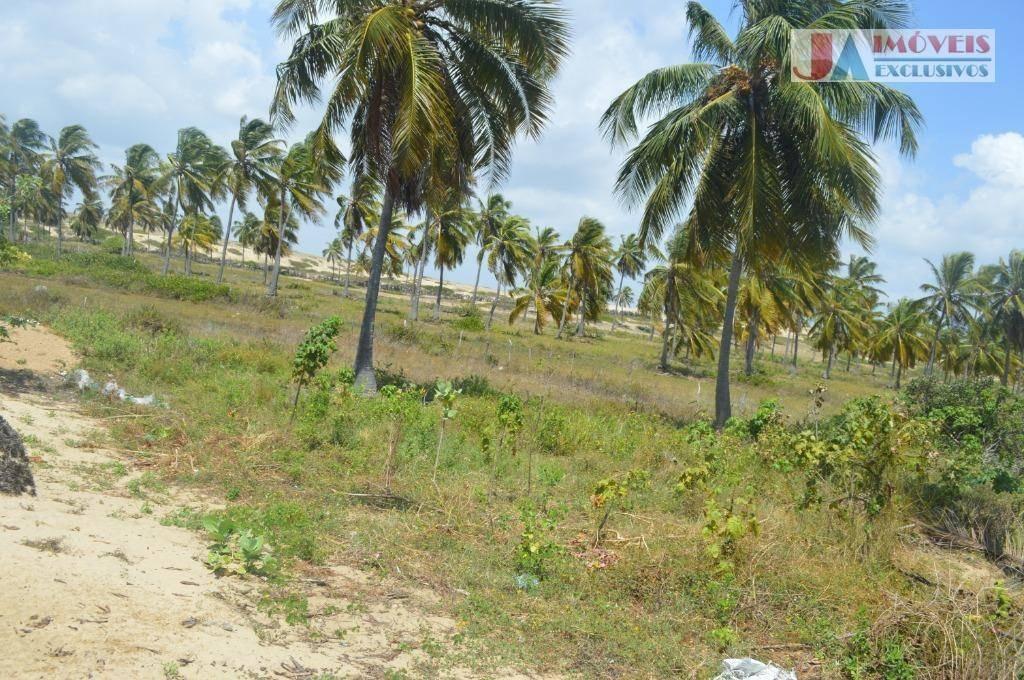 terreno à venda, 4320 m² por r$ 40.000 - icaraizinho de amontada - amontada/ce - te0059