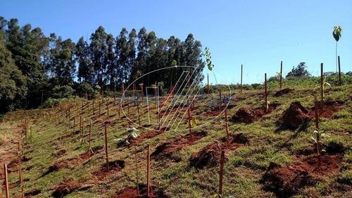 terreno à venda em castro prado - te243271