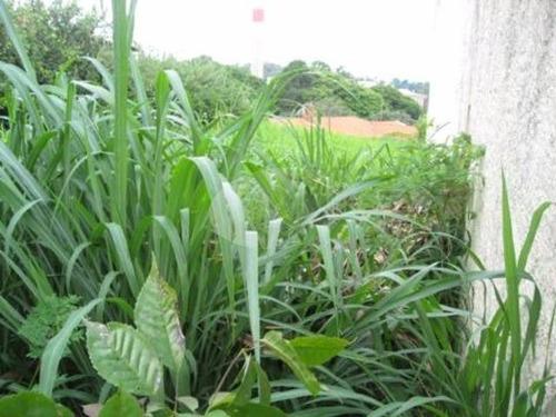 terreno à venda em jardim ribeiro - te213107