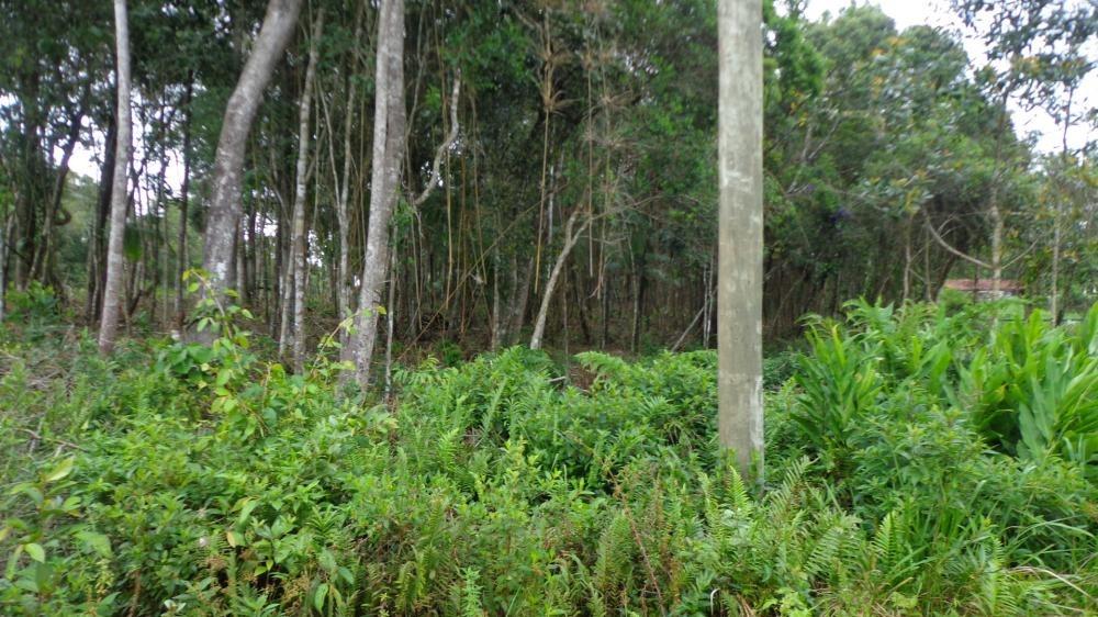 terreno à venda ,plano  alto e bosqueado . ref. 0518 m h