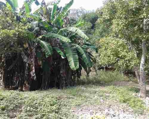 terreno venta chetumal 16,500,000 wilkim rea1