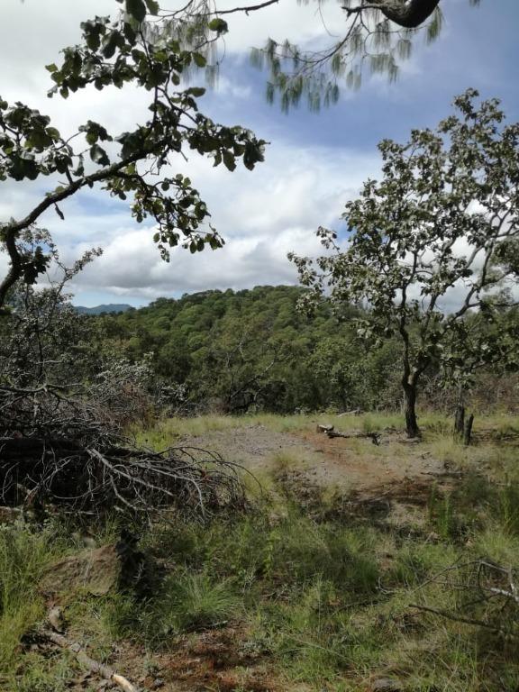 terreno venta en predio rustico denominado cerritos en chiquilistlan,jalisco.