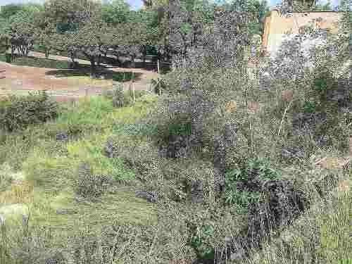 terreno venta, juriquilla, villas del mesón