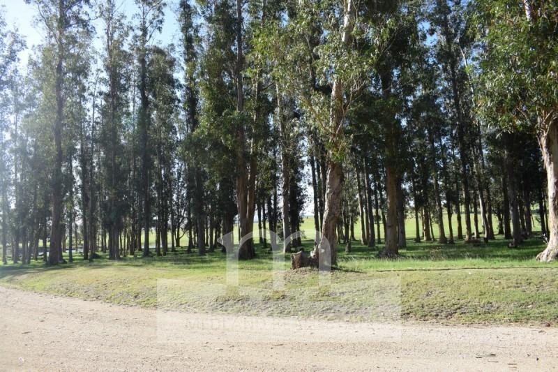 terreno venta lote el quijote chacras-ref:176