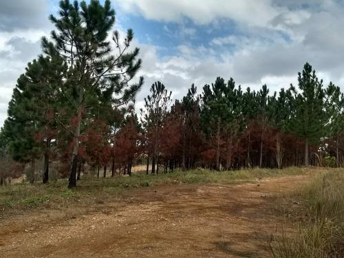 terrenos de 1000m por apenas r$ 15.000-lb