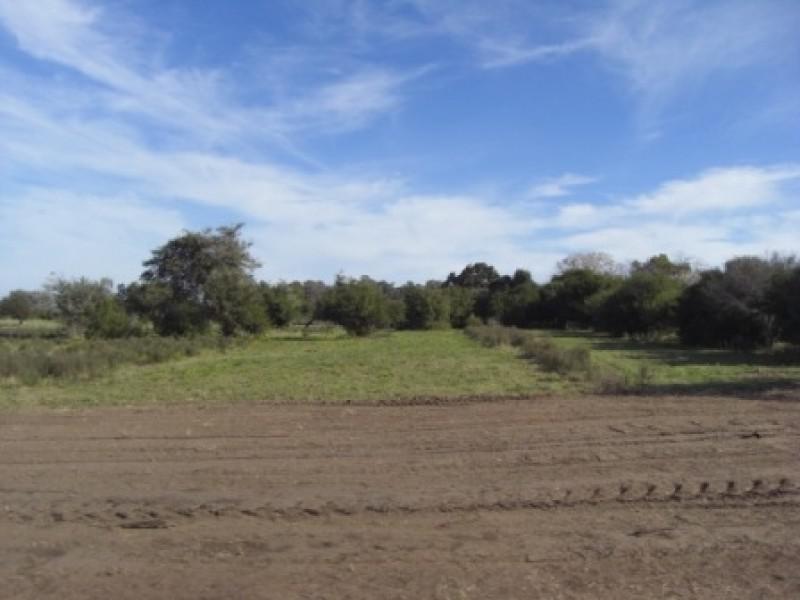 terrenos en fraccionamiento quintas de matamoras,  colonia.