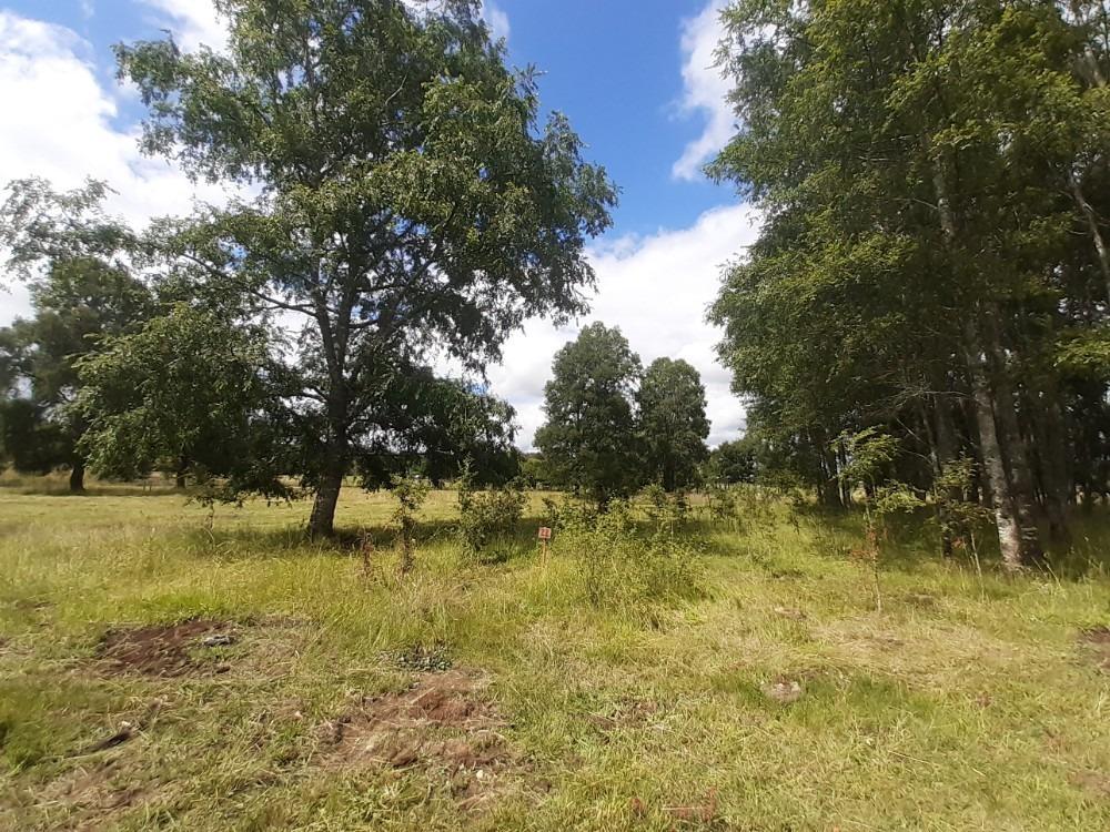 terrenos en lago ranco
