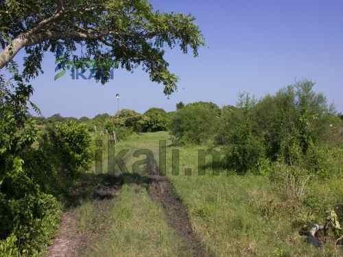 terrenos en renta en tuxpan veracruz. gran terreno de 2.5 hectáreas, ubicadas en la calzada, a un lado del ex campo de la cfe , colinda con el estero de la calzada. los servicios públicos con los que