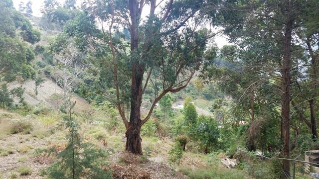 terrenos en venta colonia tovar sector las lapas